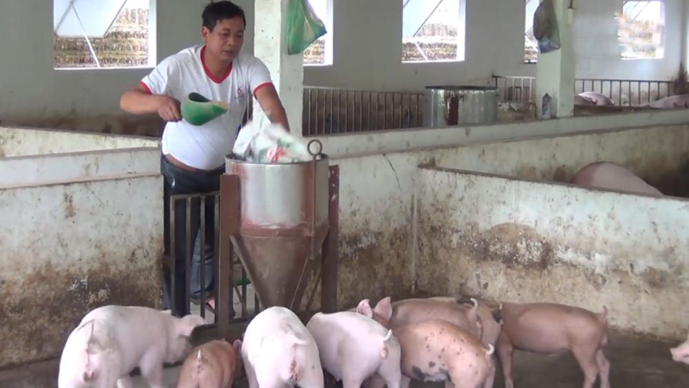 Giá lợn hơi tăng cao, đạt 57-58 nghìn đồng/kg